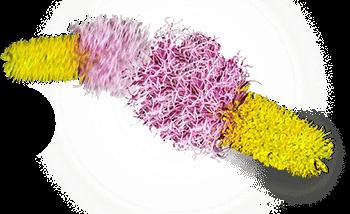 dyglomera